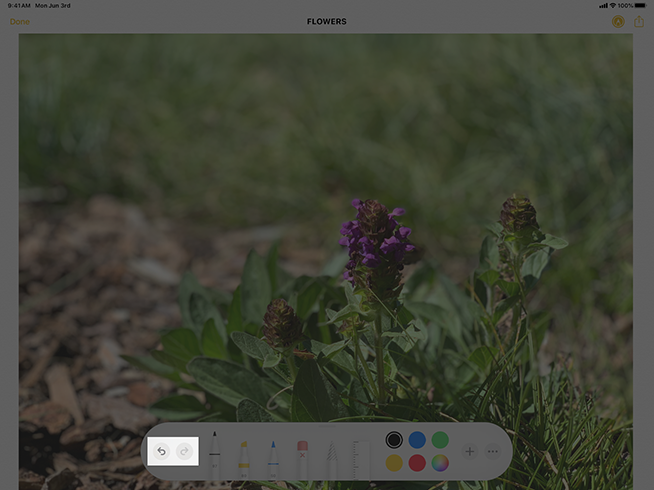 Image of an iPad screen that displays a photo of some flowers and the tool picker at the bottom edge of the screen. The image is highlighted to show the standard undo and redo buttons in the left end of the tool picker.