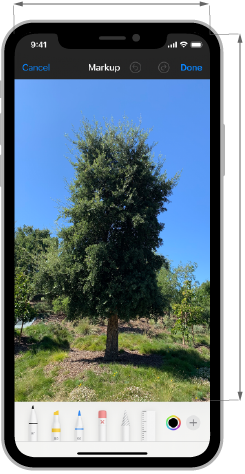 Image of an iPhone screen that displays a photo of a tall tree. The image has been moved towards the top of the screen so that the tool picker at the bottom edge does not obscure the tree's trunk. Below the image, a checkmark indicates this is the recommended style of layout.